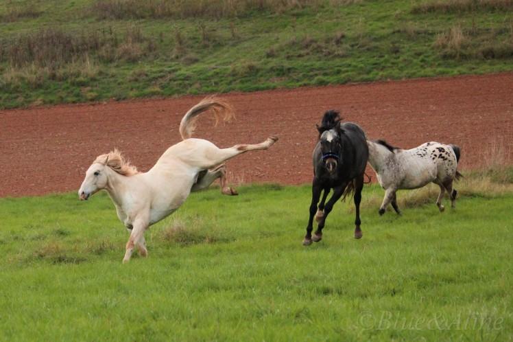 Pferdegerecht