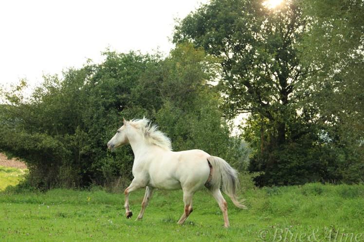 Pferdegerecht1
