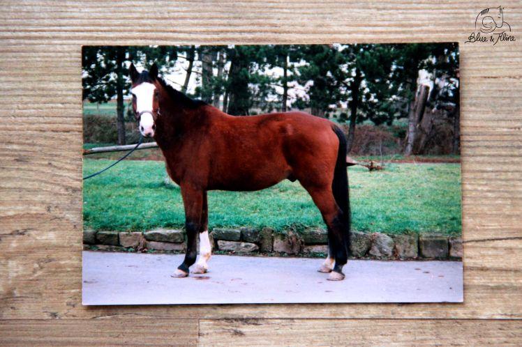 Pferd verkaufen