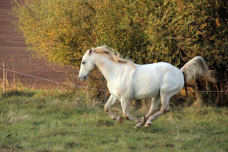 Was muss mein Pferd
