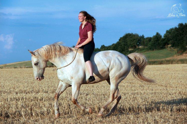 Pferd selbst ausbilden