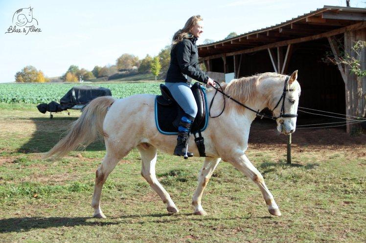 Pferd selbst ausbilden1
