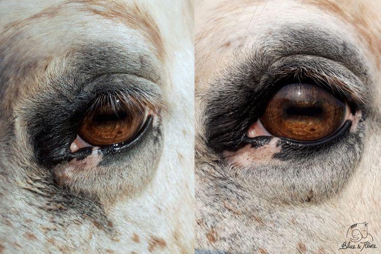 Streitfrei Augenpflege2